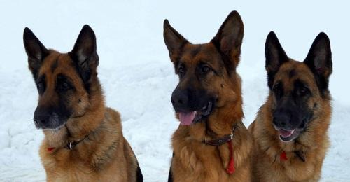 Богатова ирина дрессировка собак тольятти
